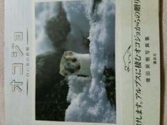 写真集【オコジョ】白い谷の妖精