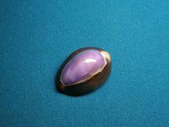 貝の標本(現生) ハナマルユキの貝殻 磨  25-30mm