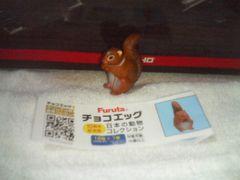 フルタ  日本の動物  10周年            ニホンリス(夏毛)