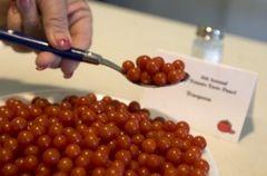 世界で一番極小のトマト 小紅マイクロトマト 3粒