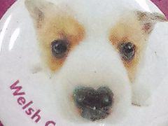 犬送定140円THEDOGバッチ犬缶バッヂCANBadgeウェルシュコーギー文具15kg