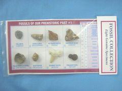 化石8種標本A(三葉虫・サンゴ・珪化木・恐竜・貝等)