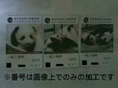 上野動物園パンダ香香シャンシャン誕生記念(高校生以上)一般入場券3枚