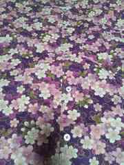 ☆処分品紫×桜満開柄ダボシャツM