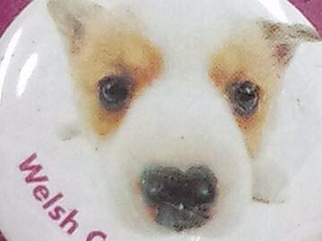 犬送定180円THEDOGバッチ犬缶バッヂCANBadgeウェルシュコーギー文具15kg
