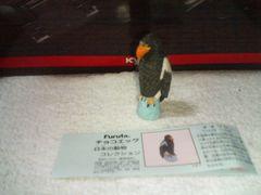 フルタ  日本の動物5  オオワシ