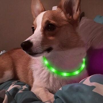 犬用 光る首輪 充電式 散歩 アウトレット品 グリーン //b6j